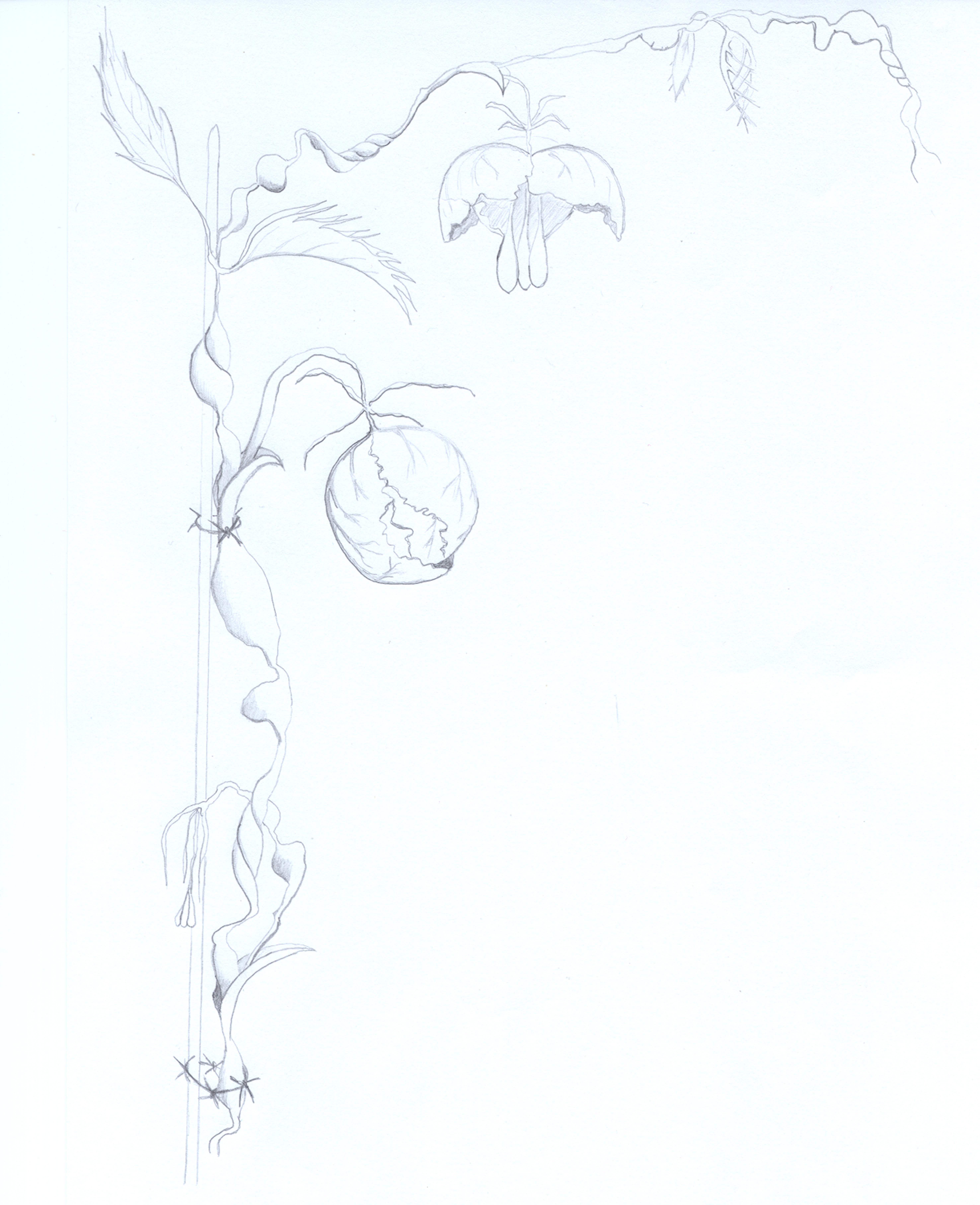 anamosques 1